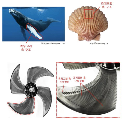 Lumps on the fins of humpback whales and furrow structures on clams embedded into the design of the fan surface