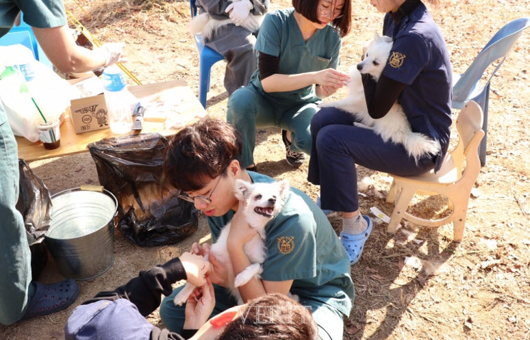 SNU vet students are taking care of abandoned animals in a shleter
